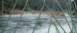 Upper Sacramento River Guided Tours